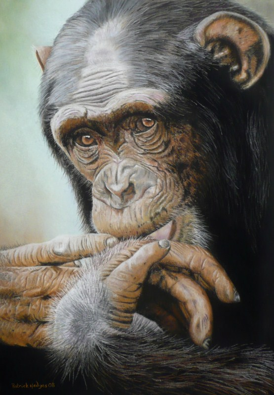 Penny for your Thoughts, Chimp