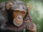 Time to Think, Chimp