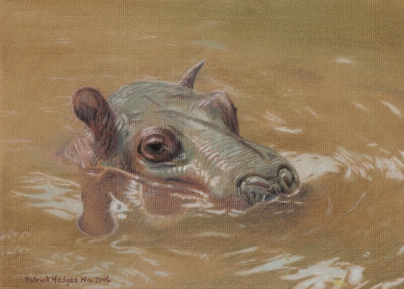 Hippo, Wallowing Around