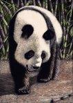 Funi the Panda