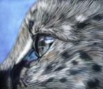 Serval Eye