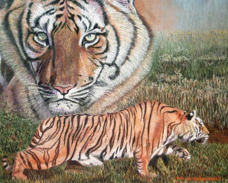 Watching Over, Tigers