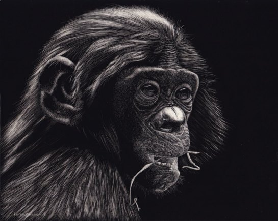 Bonobo 2013