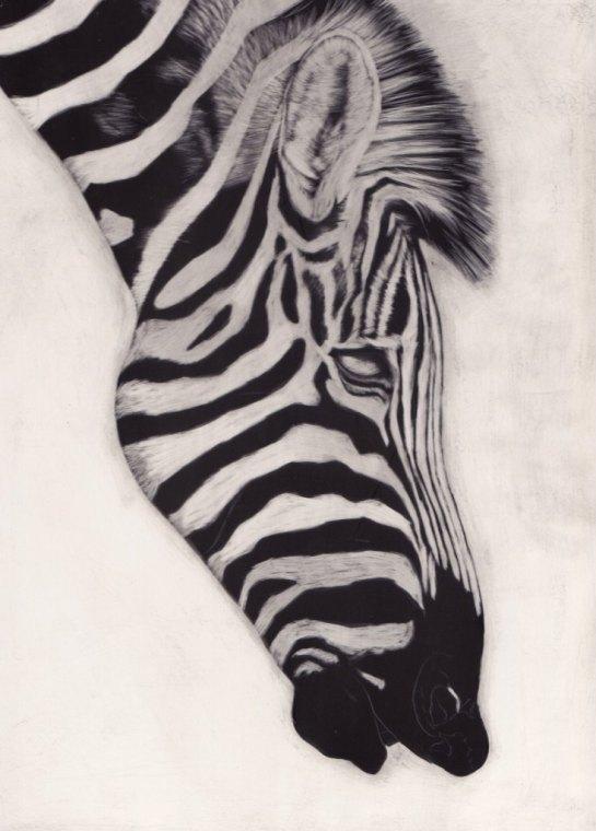 Zebra 01a