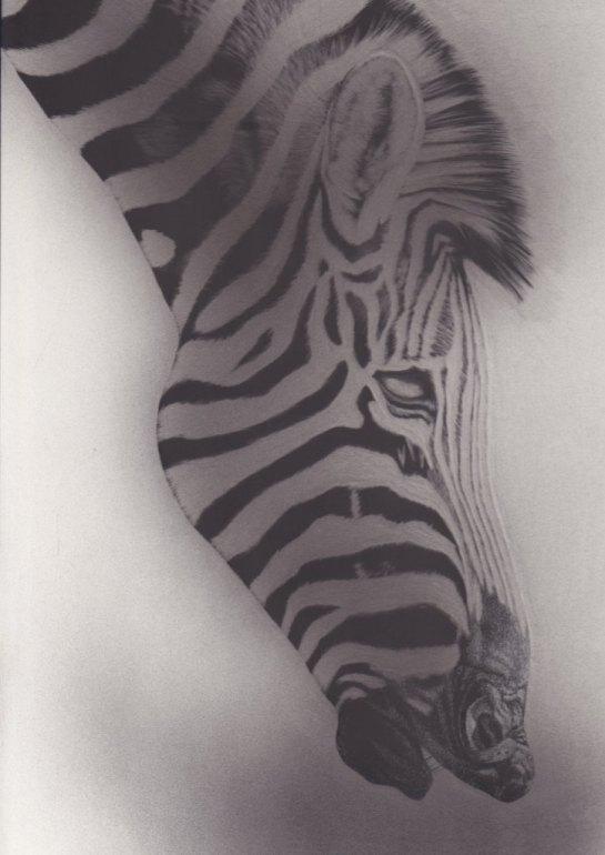 Zebra 02a