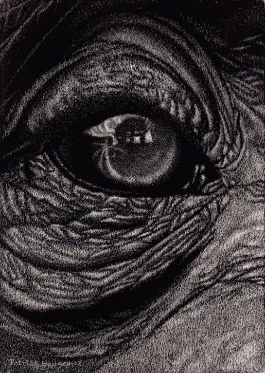 Chimp eye 2012