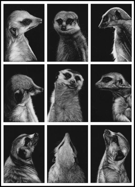 Meerkat Montage