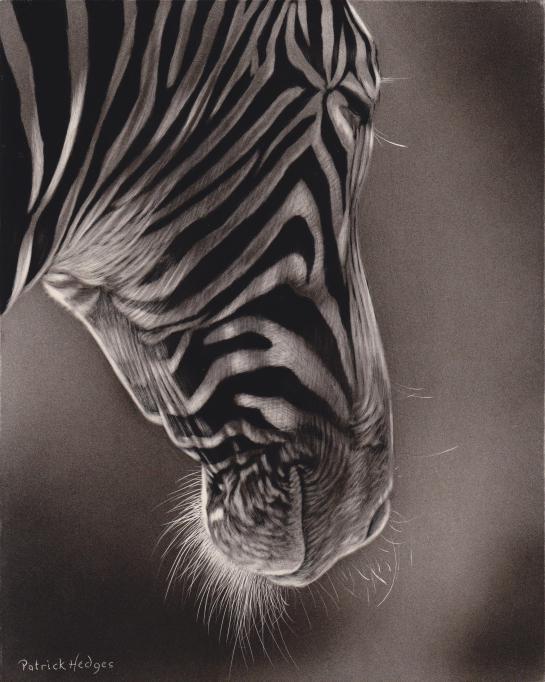 Zebra dozing 2014