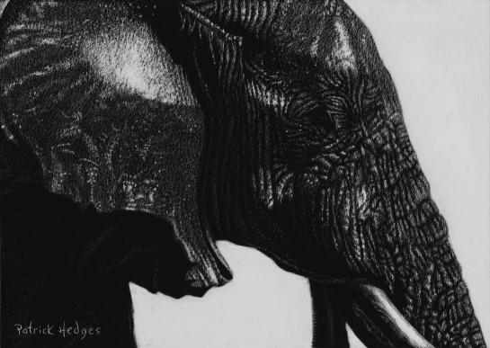 Elephant wading