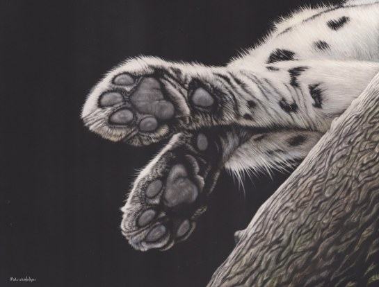 Amur leopard Pads_1579x1200