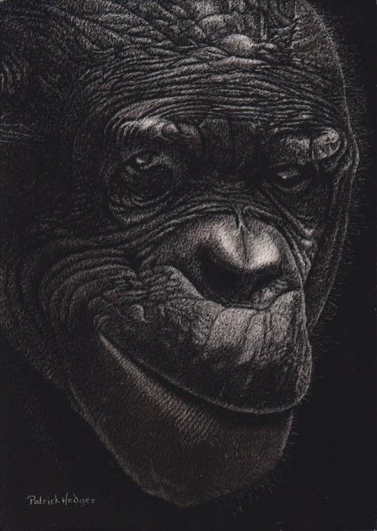 Bonobo 2016_852x1200