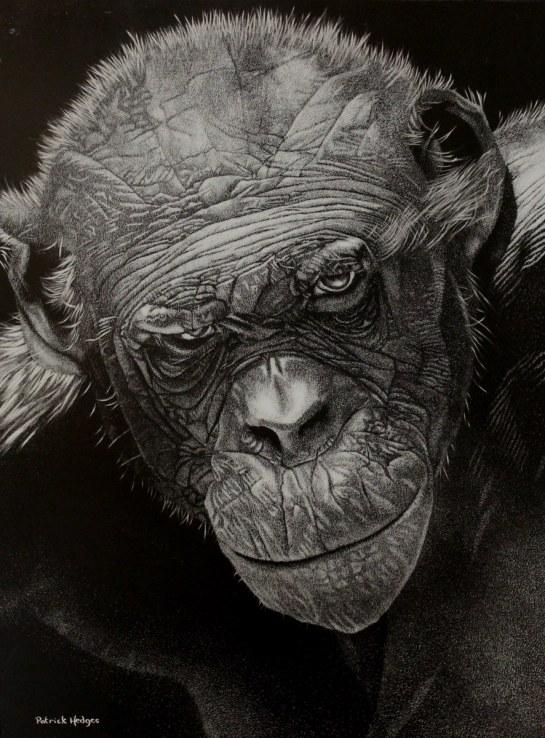 Bonobo 'Pan'_886x1200
