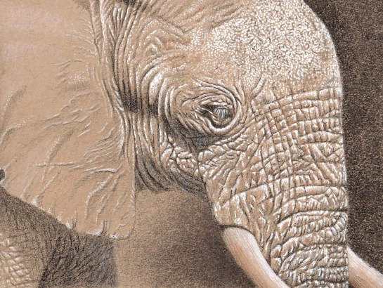 Elephant sketch in gel, cp and pen_1594x1200