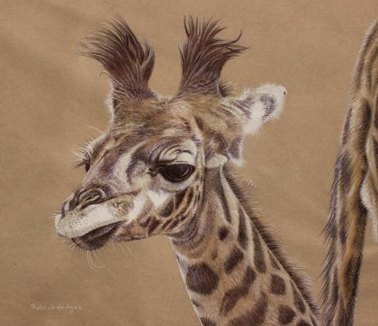 giraffe-young