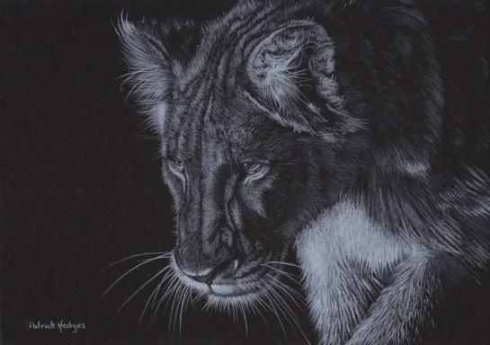 Lion The Stalk_1600x1128