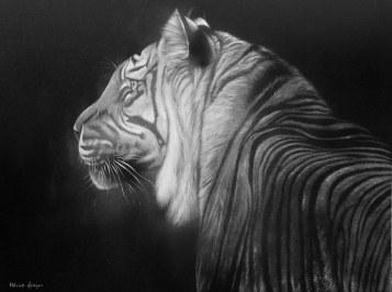 Tiger Sumatran Light_1600x1194