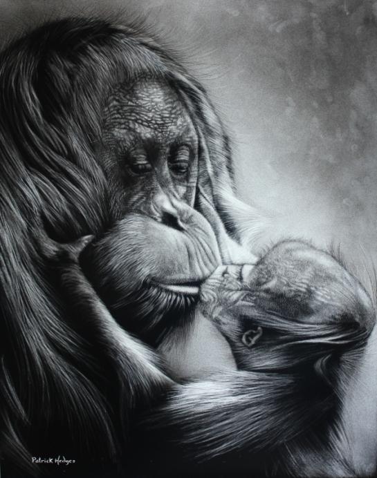 orangutan-a-mothers-love